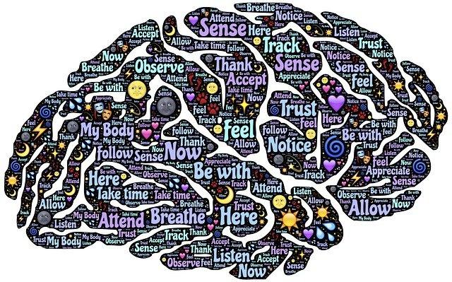 rozdělení mozku