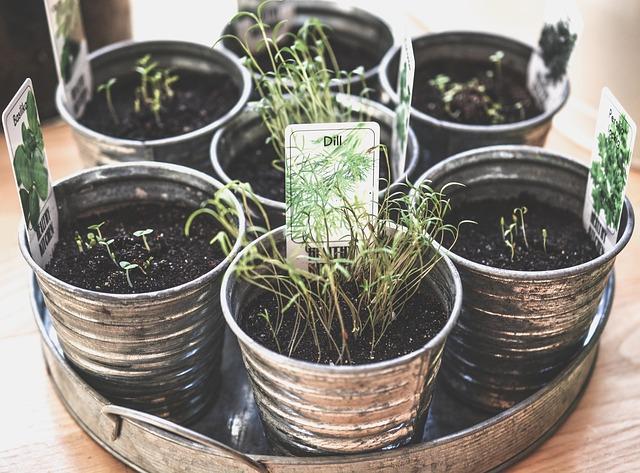 rostoucí bylinky