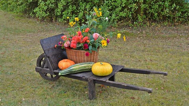 podzimní květiny a dýně