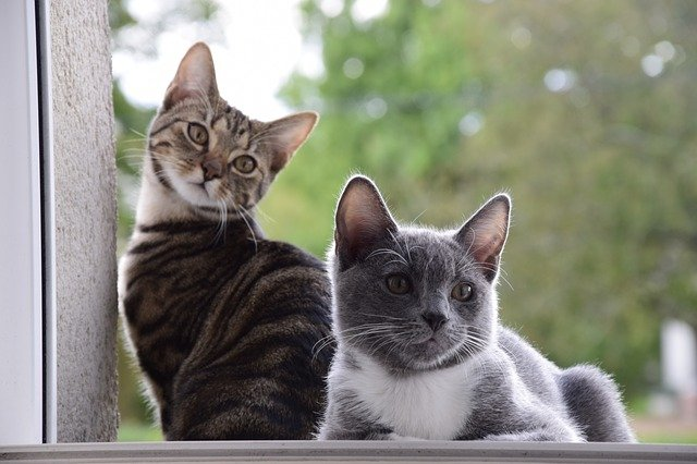 kočky na okně