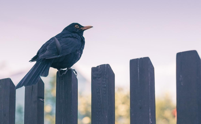 pták na plotě